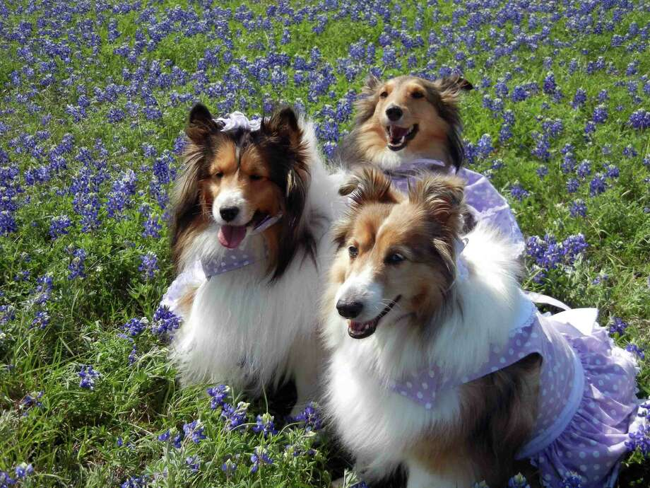 Ladies in blue by Debra Benningfield. Photo: Reader Submission