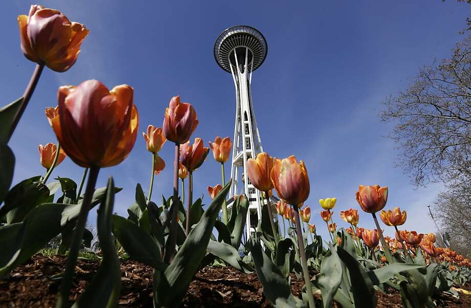 The Space Needle appears to be growing alongside tulips, Monday, April 15, 2013 at the Seattle Center in Seattle. The area enjoyed blue skies, but cool temperatures on Monday. (AP Photo/Ted S. Warren) Photo: Ted S. Warren, Associated Press