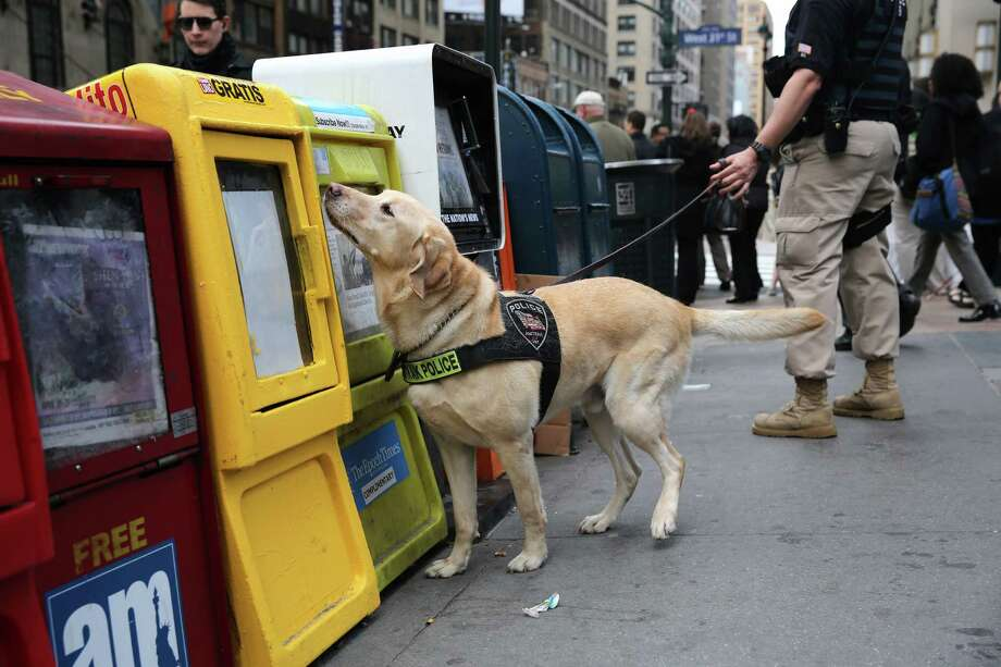 NEW YORK, NY - APRIL 16:  A police K-9 unit dog sniffs newspaper boxes for explosives outside of Penn Station on April 16, 2013 in New York City. Police were out in force throughout New York, a day after explosions near the finish line of the Boston Marathon killed 3 people and wounded more than 170 others. Photo: John Moore, Getty Images / 2013 Getty Images