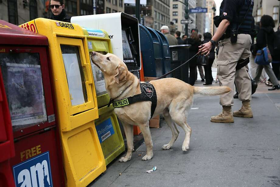 News hound: A police K-9 sniffs newspaper boxes for explosives outside of Penn Station in New York City. Police presence was heightened in New York a day after explosions near the finish line of the Boston Marathon killed 3 people and wounded 176 others. Photo: John Moore, Getty Images