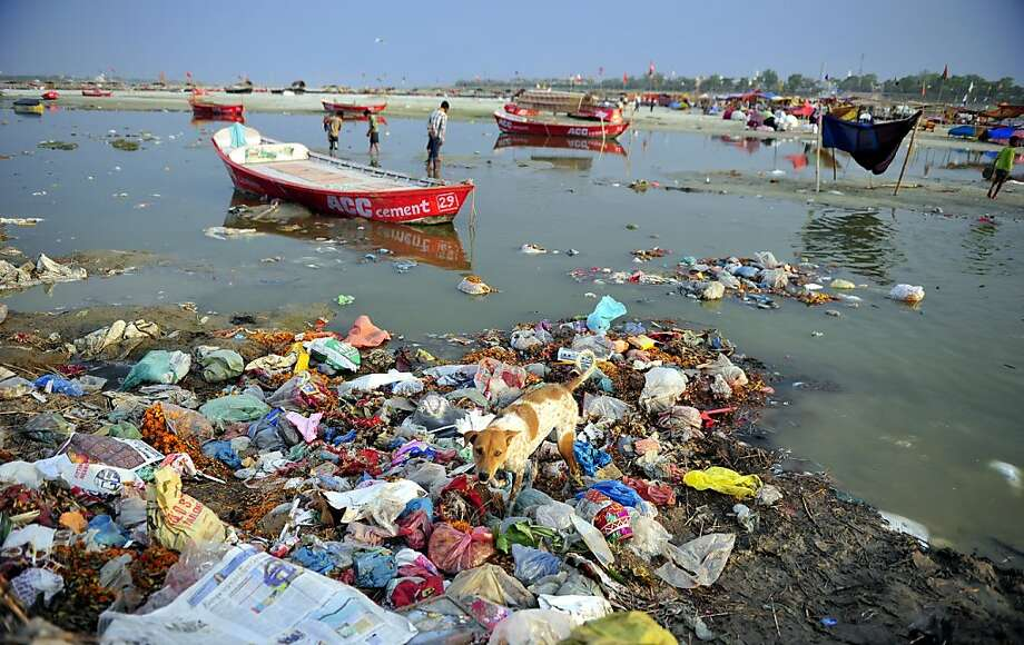 Sacred garbage dump:A dog scavenges in the filthy shallows of the Ganges River at Sangam in Allahabad, India. Photo: Sanjay Kanojia, AFP/Getty Images