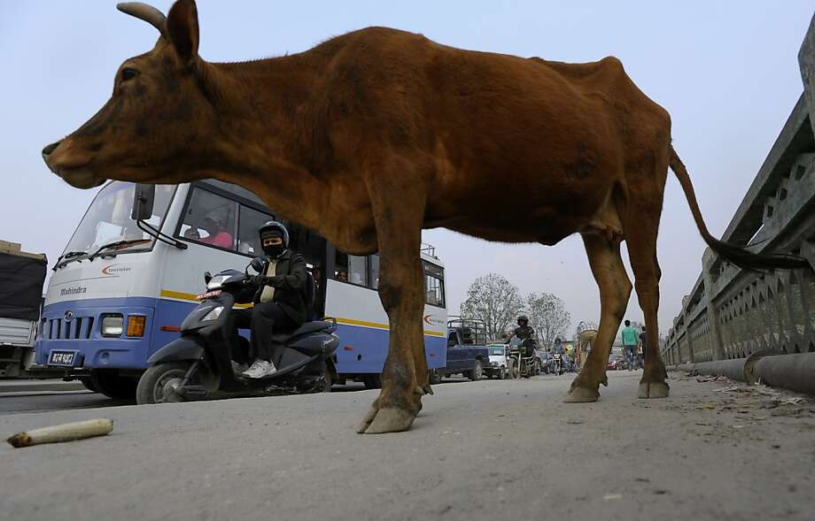 Vehicles pass a cow on a street in Kathmandu, which is about 25 miles from Namobuddha Resort. Photo: Prakash Mathema, AFP/Getty Images