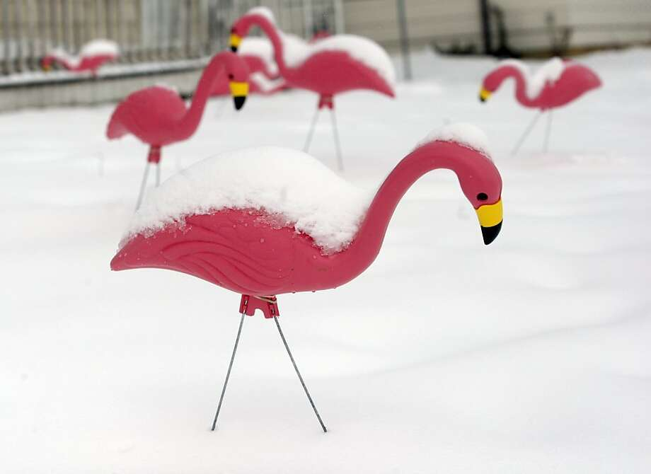 Snow piles up on flamingo lawn ornaments in the front yard of a home Wednesday, April 17, 2013 on Elm Avenue in Rapid City, S.D. After more than 20 inches of snow last week Rapid City was hit with another April snowstorm. (AP Photo/Rapid City Journal, Chris Huber) Photo: Chris Huber, Associated Press
