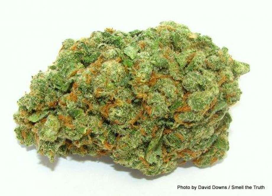 Many fans of the stoner holiday 4/20 will start this Saturday with the legendary, sweet, piney sativa Jack Herer. Named for the famed hemp activist, this custom Dutch strain can provide energy to get you out the door. Just remember your keys! Photo: Picasa, David Downs / Smell The Truth