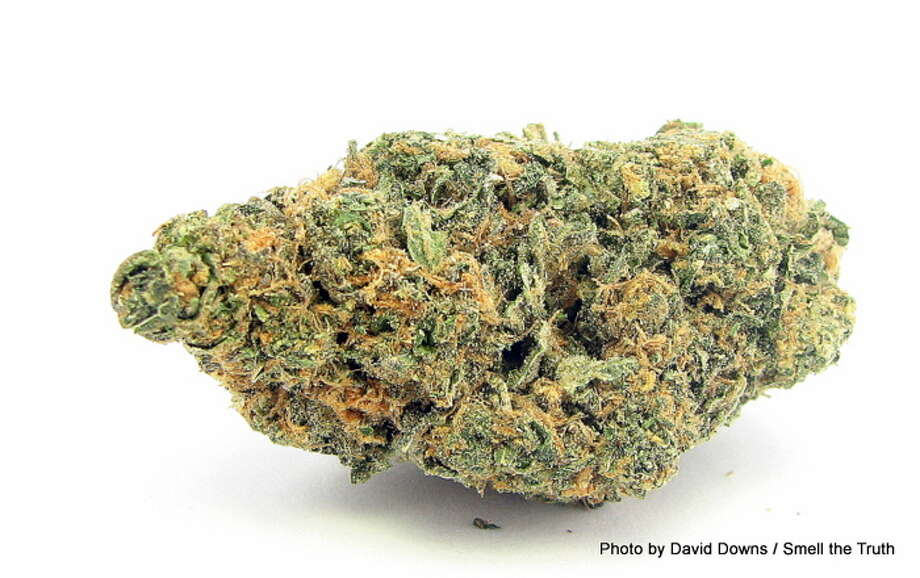 2013 is the year of the Girl Scout Cookies offshoots, and when we're settling in after a long day it's Animal Cookies we turn to. A mix of OG Kush, Durban Poison and Cherry Pie, it smells phenomenal and sooths sore limbs. Photo: Picasa, David Downs / Smell The Truth