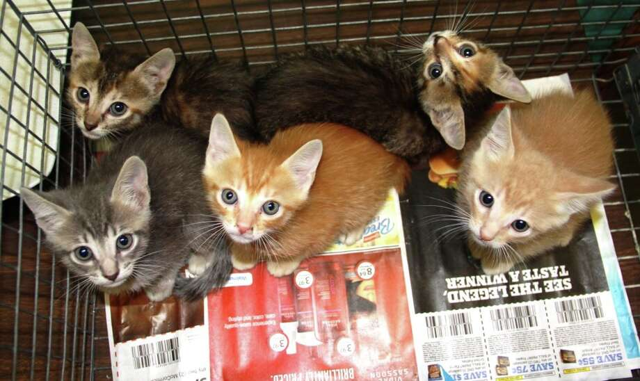 BARC once took in 25 underage kittens in one day. Photo: BARC