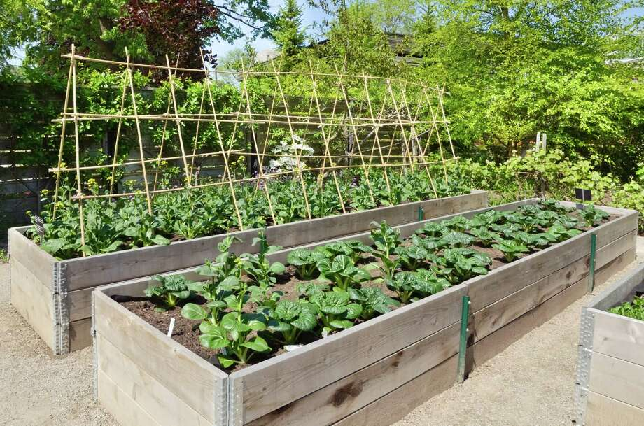 Raised beds can help seniors. (Fotolia.com) / alisonhancock - Fotolia