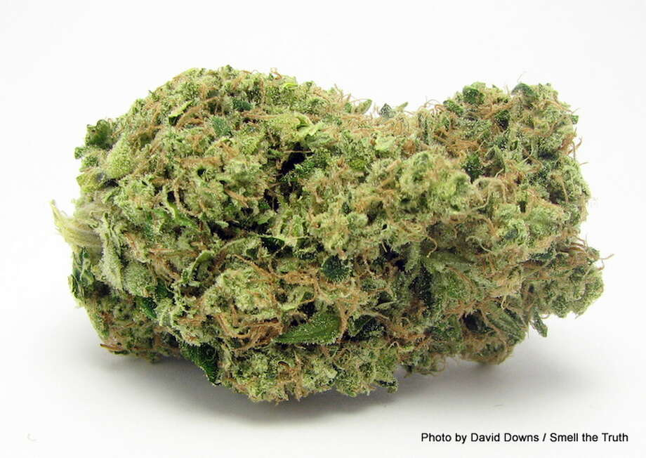 Dispensaries are going to be blowing through their stocks of Sour Diesel, among the best-selling sativa-dominant hybrids in the U.S. Perfect for stress relief after long lines at the club. Photo: Picasa