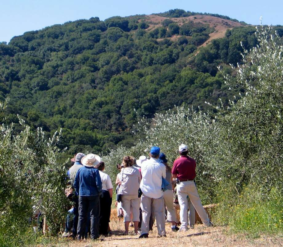 Visitors walk through McEvoy Ranch\'s olive orchards on seasonal public tours.