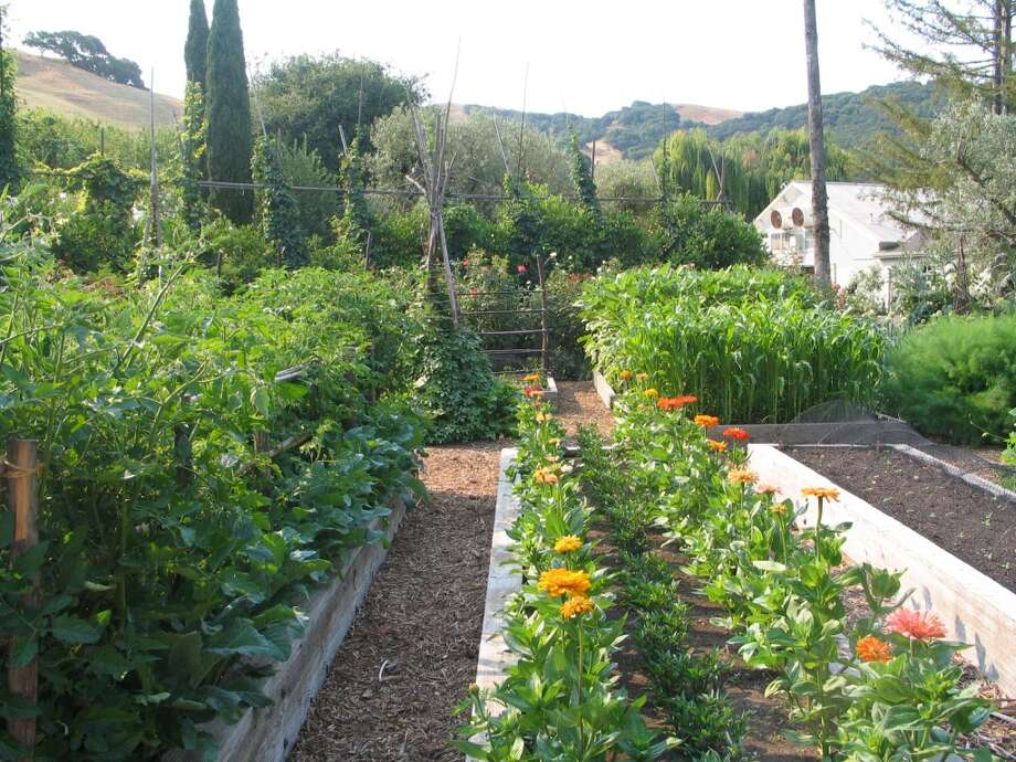 The kitchen garden at McEvoy Ranch, featured on several 2013 public tours.