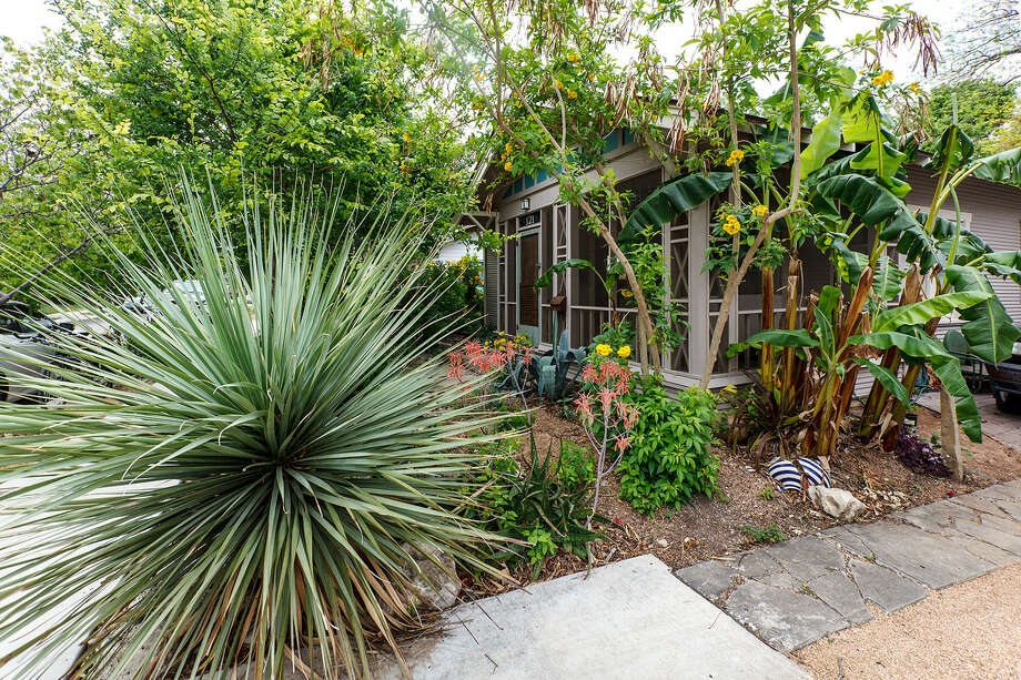 Landscape architect Larry Clark has several interesting features in his yard in the River Road neighborhood, including a creek bed, banana trees that catch water runoff (right) and drought-resistant plants. Photo: Photos By Marvin Pfeiffer / San Antonio Express-News