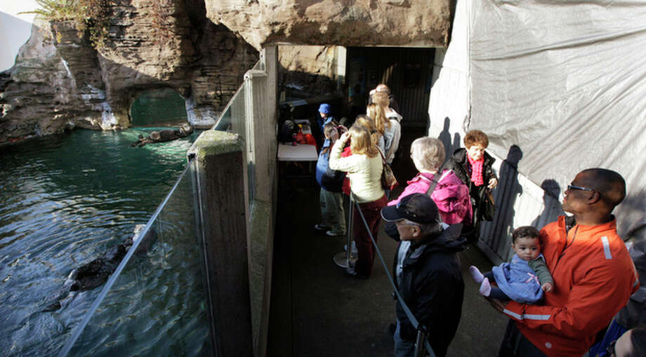 People at the Seattle Aquarium watch as sea otter Aniak, upper left, swims with her yet-to-be named daughter, along with Aniak's mother, Lootas, lower left, Thursday, Jan. 26, 2012, in Seattle. The baby was born on Jan. 14, 2012 and will be named in February, after the public votes on a selection of names prepared by the Aquarium staff. Photo: Ted S. Warren / Associated Press