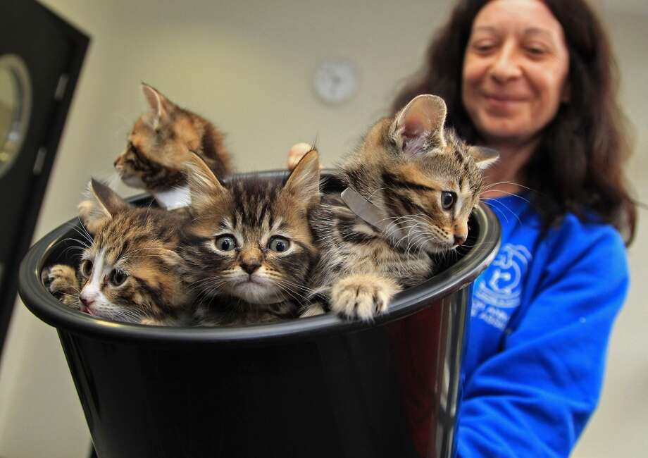 Kittens in a bucket! Photo: AFP, AFP/Getty Images