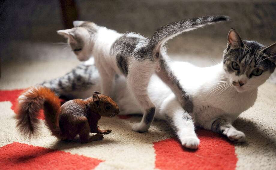 A kitten wonders why her brother\'s tail is so much fuller than hers!