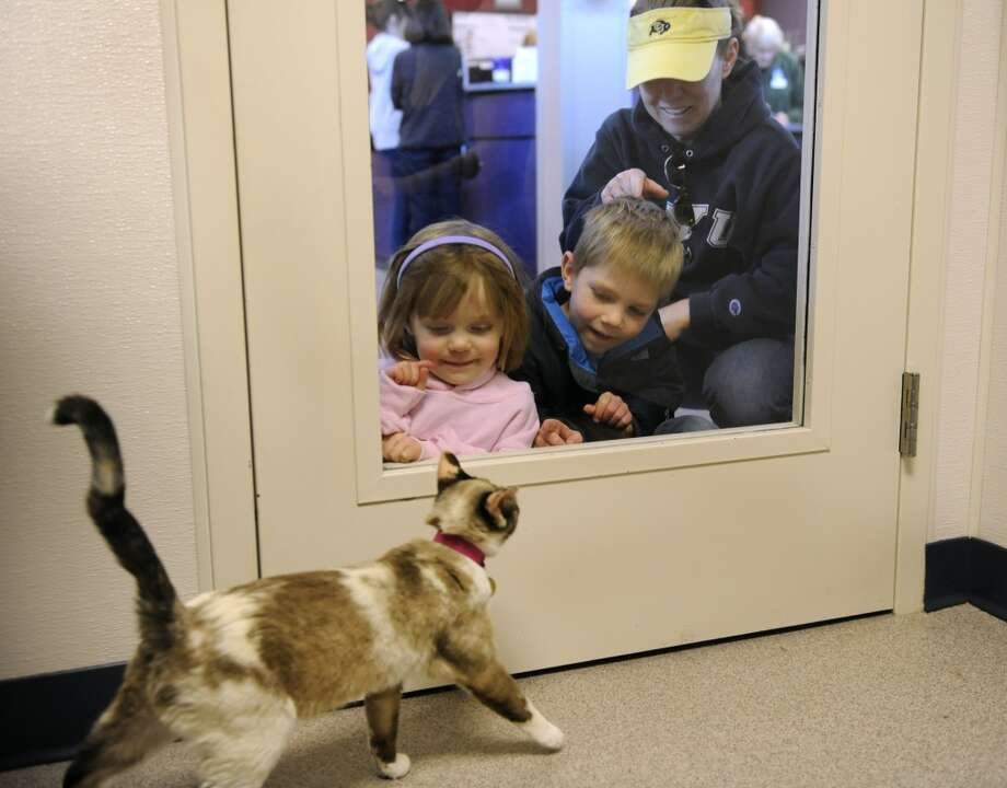 Elise, 4, left, and Dane, 6, look for a new kitty friend to adopt!