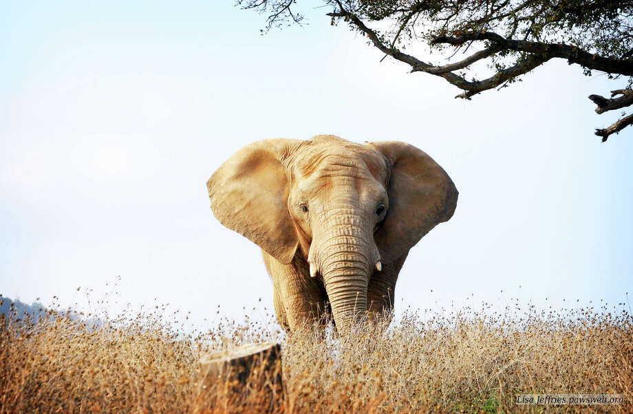 """An Apology to Elephants"" airs Monday on HBO. Photo: HBO / Connecticut Post Contributed"