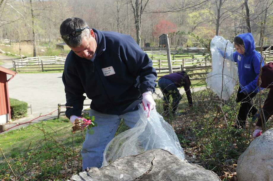 Steve Montello, of Stamford, and his daughter Leah, 12, both volunteers pulls garlic mustard to honor Earth Day Family at Stamford Museum & Nature Center in Stamford, Conn., Sunday, April 12, 2013. The garlic mustard leaves harvested during this Earth Day activity will be offered to local food banks to help feed the hungry. Photo: Helen Neafsey / Greenwich Time