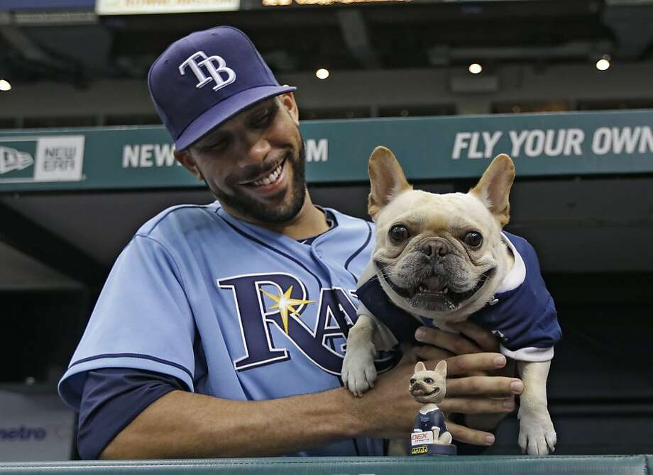 """Tampa Bay Rays starting pitcher David Price poses with his dog """"Astro"""" and a """"Astro"""" bobblehead before a baseball game against the Oakland Athletics Sunday, April 21, 2013, in St. Petersburg, Fla. (AP Photo/Chris O'Meara) Photo: Chris O'Meara, Associated Press"""