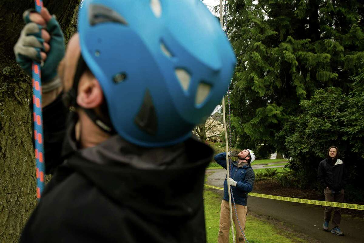 Dave Bayard, left, and Alex Maughan, center, help climbers ascend at a tree-climbing event put on by the Seattle-local, eco-adventuring Canopy Climbers in honor of Earth Day on Sunday at Volunteer Park in Seattle. Attendees took turns ascending a 110-foot red oak named