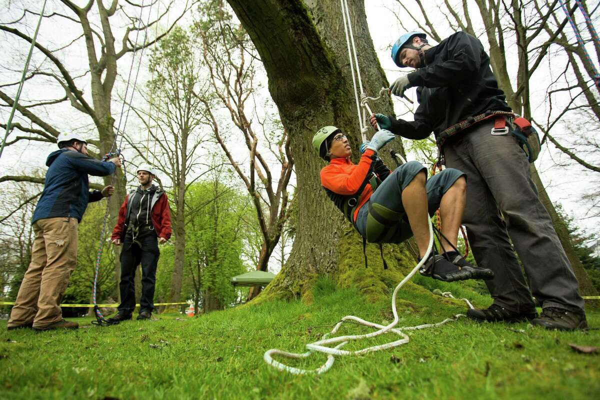 Dave Bayard, right, helps Lorenzo Delara, center right, into gear for his ascent at a tree-climbing event put on by the Seattle-local, eco-adventuring Canopy Climbers in honor of Earth Day on Sunday, April 21, 2013, at Volunteer Park in Seattle. Attendees took turns ascending a 110-foot red oak named