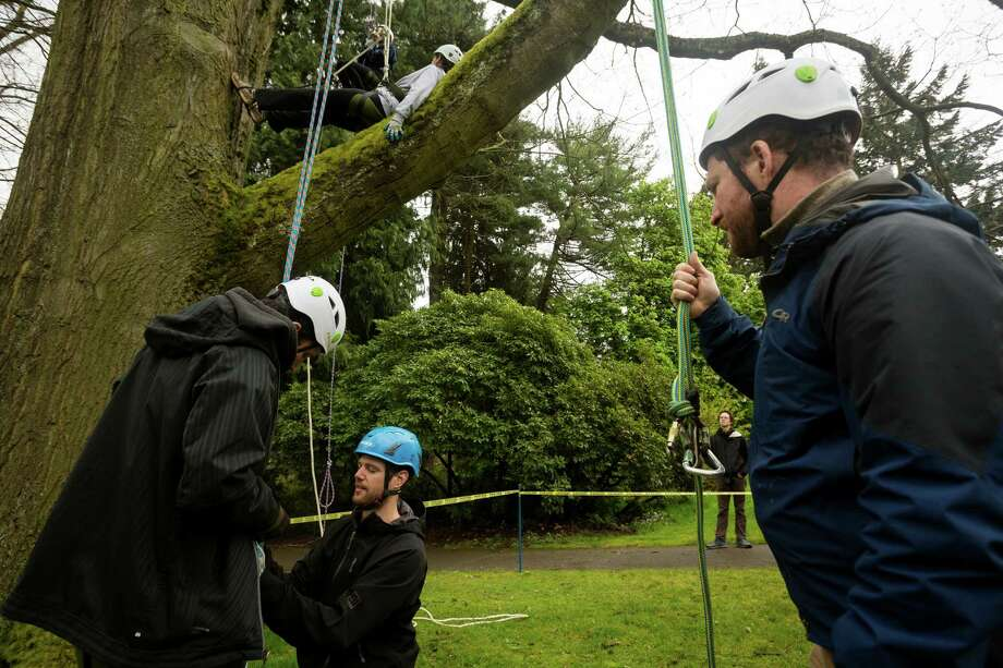 "Dave Bayard, in the blue helmet, straps in Dave Greenbaum, left, before Greenbaum's ascent at a tree-climbing event put on by the Seattle-local, eco-adventuring Canopy Climbers in honor of Earth Day on Sunday at Volunteer Park in Seattle. Attendees took turns ascending a 110-foot red oak named ""Her Majesty."" Photo: JORDAN STEAD, SEATTLEPI.COM / SEATTLEPI.COM"