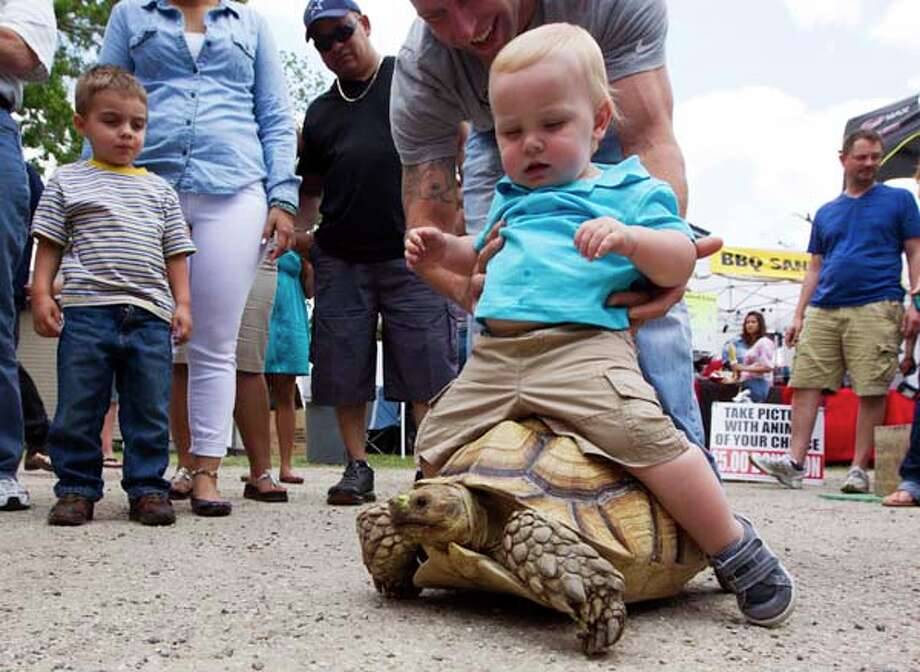 Thirteen-month-old Nathon Hay rides a 9-year-old tortoise. Photo: J. Patric Schneider, For The Chronicle / © 2013 Houston Chronicle