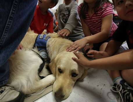 Students at West Elementary School pet Moses, a trained Comfort Dog from Christ Lutheran Church in Cairo Nebraska.  Students returned to school on Monday April 22, 2013 hoping to regain some normalcy in thier lives after West, TX experience a masive explosion last week. Photo: Bob Owen, San Antonio Express-News / ©2013 San Antonio Express-News