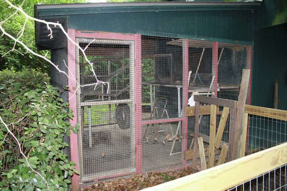 In Ann Reynold's backyard, there is a cage where the raccoons go when they're about six months old or too large to be in crates. The cage is used to help them get acclimated to the wild before release. Photo: Jose D. Enriquez III