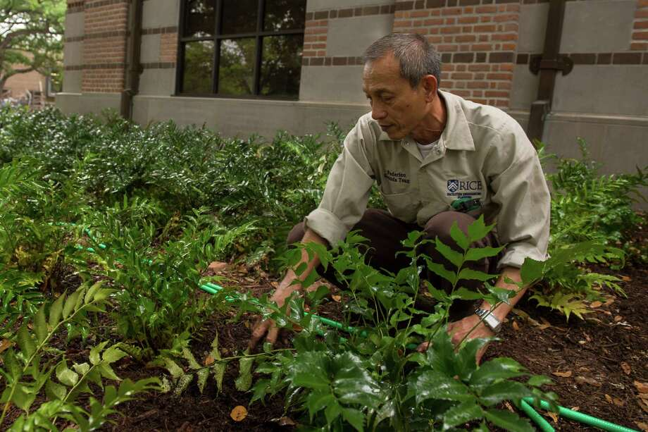A groundskeeper plants greenery around the Rice University campus.