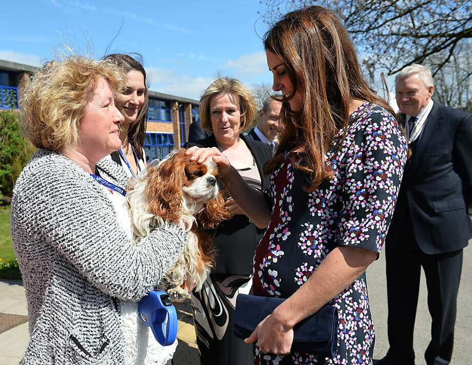Kate and the Cocker Spaniel: The Duchess of Cambridge and mother to be meets Henry the official school dog at Willows Primary School in Wythenshawe, Manchester. Catherine was visiting the school to launch a new counseling program. Photo: Paul Ellis, AFP/Getty Images