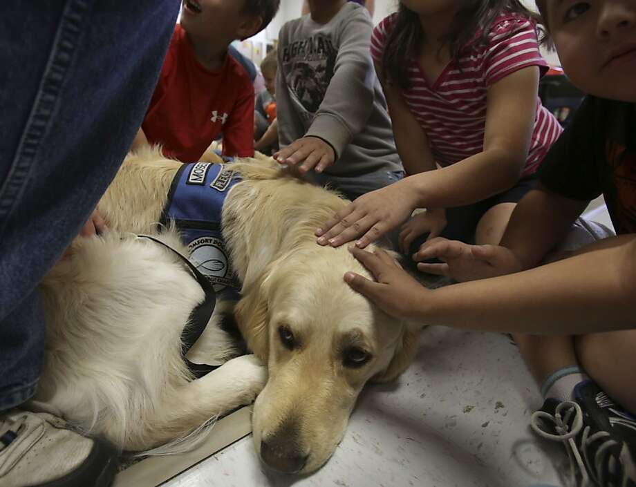 A little more around the ears. That's it. Ahh: Students at West Elementary School in West, Texas, - where a massive explosion struck a fertilizer plant last week - stroke Moses, a trained comfort dog from Nebraska. But it's not clear who's comforting whom. Photo: Bob Owen, San Antonio Express-News