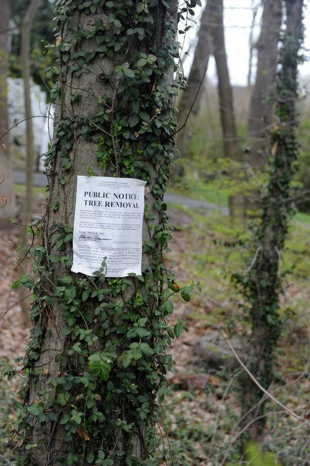 A tree is marked with public notices on Oval Avenue in Riverside, Conn., Tuesday, April 23, 2013. The Town of Greenwich will hold a tree hearing Friday on a request to cut down about 40 trees on town-owned property close to the Riverside train station. Photo: Helen Neafsey / Greenwich Time