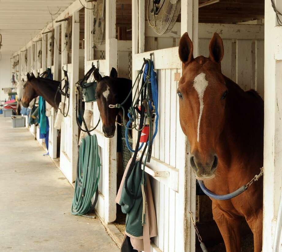 Horses await the upcoming match at a Yellowstone Academy benefit at the Houston  Polo Club Sunday April 21, 2013.(Dave Rossman photo)