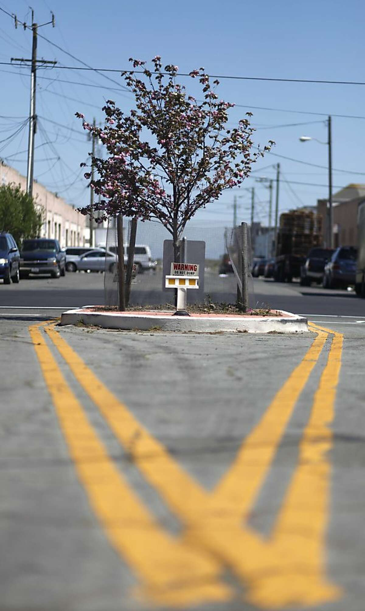 A tree sways in the wind at the Intersection of Shafter Avenue and Hawes Street on Tuesday, April 23 2013 in San Francisco, Calif.