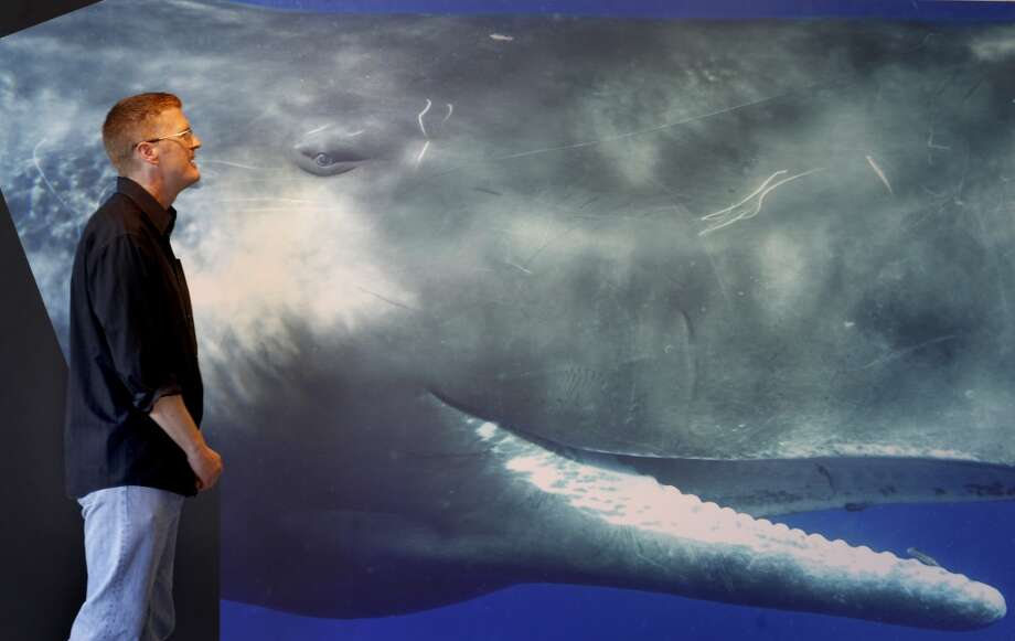 "Bryant Austin smiles as he looks at his composite photograph of ""Scar,\"" a Sperm whale he photographed. Bryant Austin has photographed whales close up and his intimate portraits are on display at the Museum of Monterey, Calif."