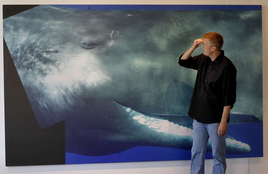 "Bryant Austin looks at a life size composite portrait of ""Scar,\"" a Sperm Whale. Scar proved to be too active for a complete portrait.  Bryant Austin has photographed whales close up and his intimate portraits are on display at the Museum of Monterey, Calif."