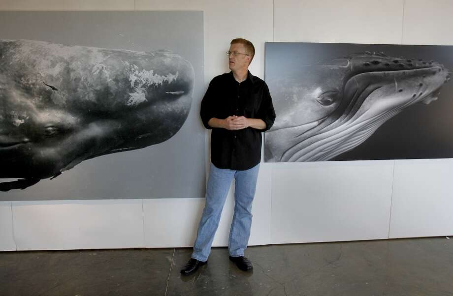 In the museum, Bryant Austin stands between two black and white portraits of whales. Bryant Austin has photographed whales close up and his intimate portraits are on display at the Museum of Monterey, Calif.