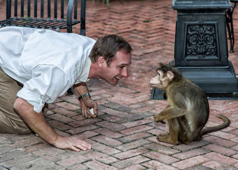 Brian Staples has made a career of rescuing misfit animals, including the bonnet macaque Joey, who was left paralyzed after damage to his zoo enclosure caused by Hurricane Ivan. Joey, who is now fully mobile, is one of the stars of Staples Animal Safari, the headlining act at this year's Nature Fest, 10 a.m. to 5 p.m. Saturday, April 27, in Bridgeland. Photo: Photo Courtesy Of The Howard Hughes Corporation