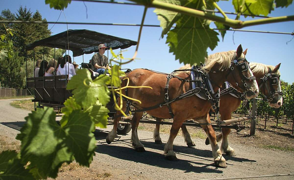 The horse drawn carriage ride through the vineyard at Landmark Winery in Kenwood, Calif., is seen on July 23rd, 2011.