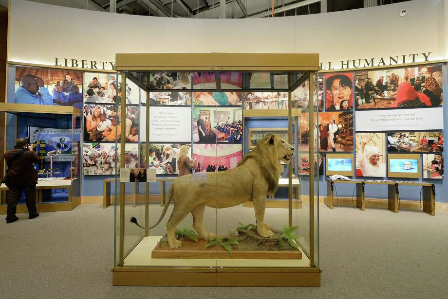 A lion presented to President George W. Bush by Tanzanian President Jakaya Kikwete during his trip to Africa in 2008 is seen at the George W. Bush Presidential Center on the campus of Southern Methodist University i seen on April 24, 2013 in Dallas, Texas. Dedication of the George W. Bush Presidential Library is to take place on April 25 with all five living U.S. Presidents in attendance and an expected 8,000 invitation-only guests. Photo: Kevork Djansezian, Getty Images / 2013 Getty Images