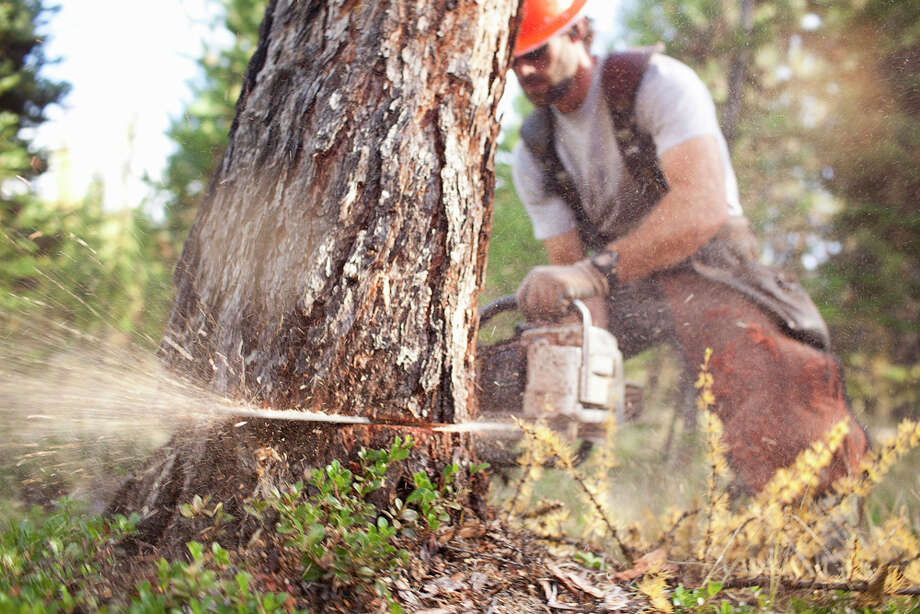 Worst jobs2. Lumberjack:Logging is one of the most dangerous professions in America, one in which 64 loggers died from work-related injuries in 2011. Remote locations, low pay, constant physical hazards and tepid job growth (4 percent through 2020) made this profession No. 2 for worst job in America. Photo: Noah Clayton, Getty Images / (c) Noah Clayton