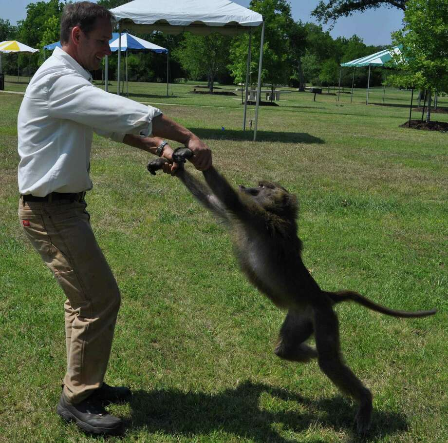 Dancing with chimps. Photo: Handout