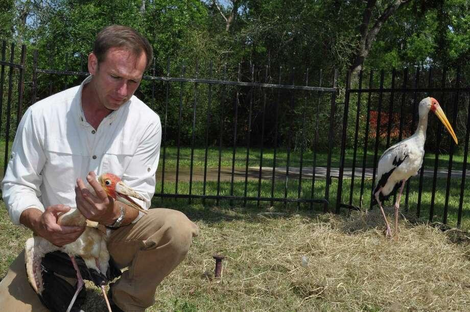 Stork Photo: Handout