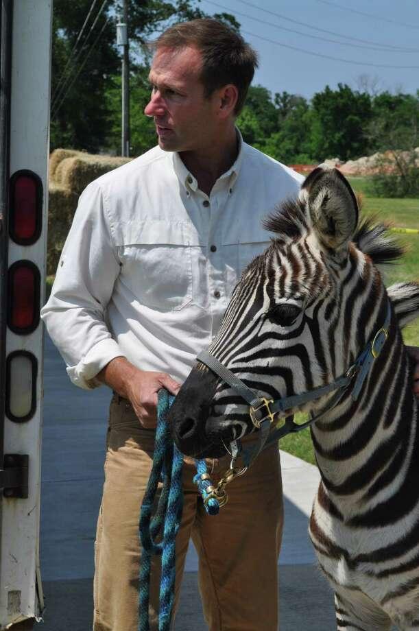 Zebra Photo: Handout