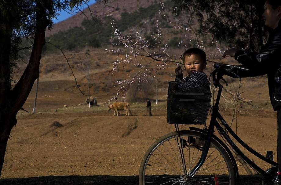 La tour de farm: A boy rides in bicycle basket comfort through the countryside north of Kaesong, North Korea. Photo: David Guttenfelder, Associated Press