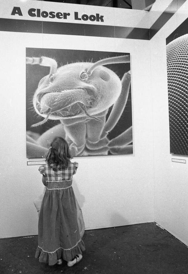 Jan. 18, 1977: A young girl looks at the enlarged head of an ant in an Exploratorium photo gallery. Judging by the Chronicle photos, this installation was appreciated equally by young kids and older ones, who got stoned in the parking lot under the camper shells of their Ford Rangers.
