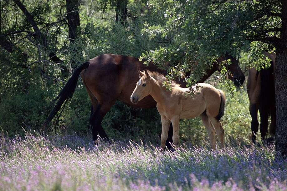 The first of the Wild Horse Sanctuary\'s new themed rides is a two-day Wild Horses and Wildflowers trip with a wildflower expert.