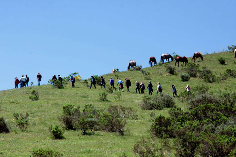 Return to Freedom, a sanctuary in Santa Barbara County, kicks off its summer of tours, walks, photo safaris and special events on May 4. Photo: Arnold Coleman