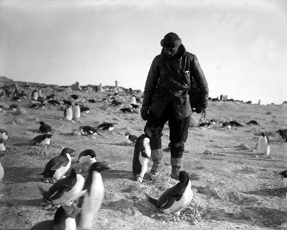 Photographer Herbert Ponting is attacked by an angry penguin on the penguinry at Cape Royds. Photo: Popperfoto, H.G. Pointing/Terra Nova / Popperfoto