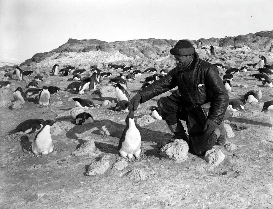 Photographer Herbert Ponting amongst a group of penguins on the penguinry at Cape Royds. Photo: Popperfoto, H.G. Pointing/Terra Nova / Popperfoto